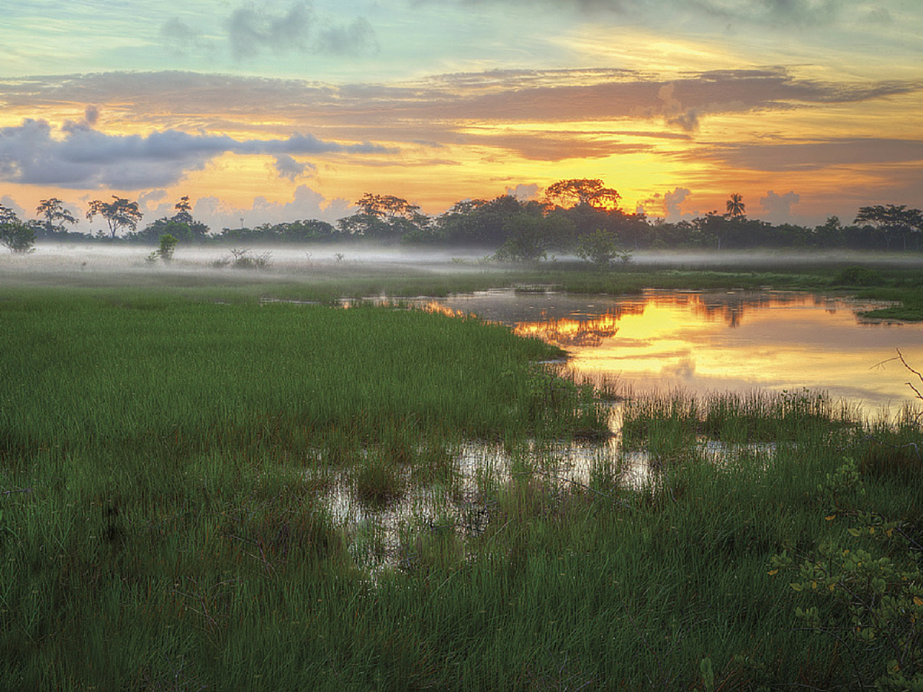 Dawn breaks over the Caroni Swamp. Image Source: Discover Trinidad and Tobago.